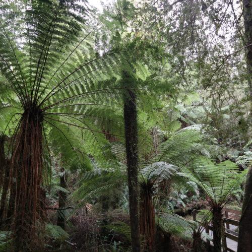 ~南島西部を訪れる~ニュージーランドの大自然と歴史をまるごと贅沢満喫ツアー【5日間】